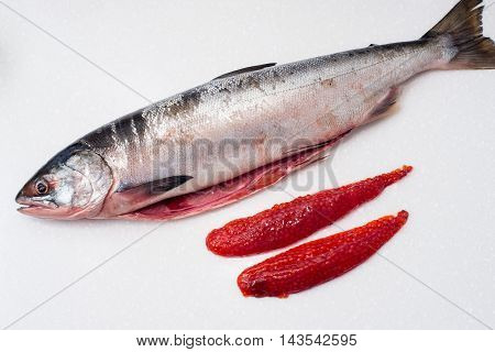 Salmon Fishs On White Background