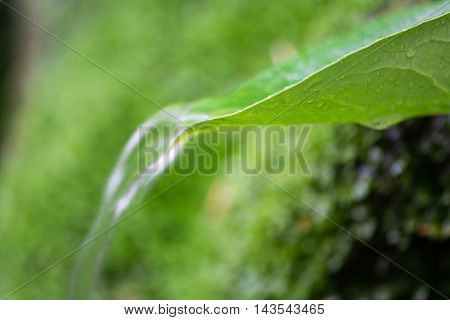 Water flowing over leaf with green background. Spring water pouring over laurel leaf long exposure with motion blur