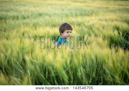 Small boy in cyan T-shirt stands in the rye field and looks to the side with a smile. He touches the rye. Sunlight fills from the back. Outdoors. Horizontal.