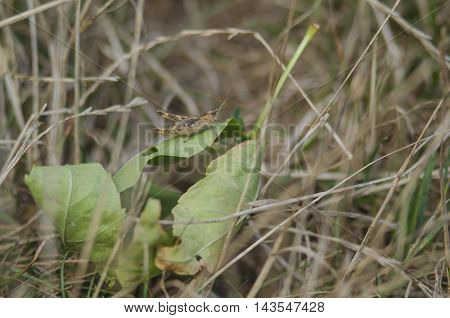 grasshopper on a green leaf in the open air