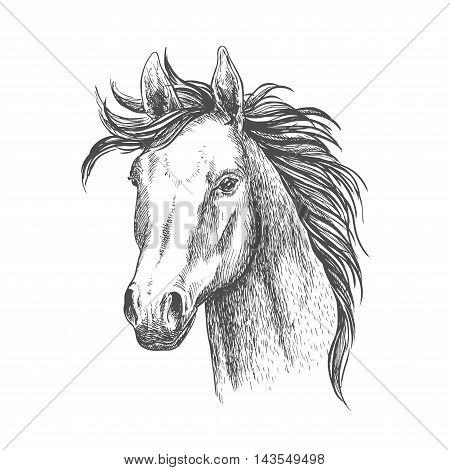 Mare horse sketch symbol. Equestrian sport, riding club, horse racing theme design
