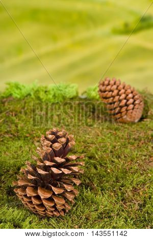 Background for fairytale or garden gnome scenes with pine-cones