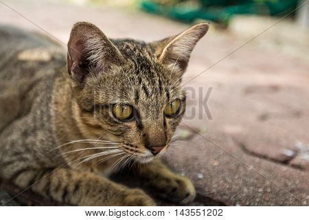 Portrait of a striped cat outdoor background