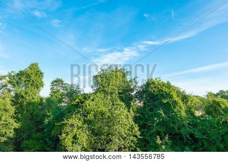 looking up at nice blue sky with treenatural background