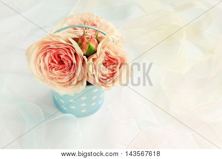 Delicate garden roses in vintage tin bucket blue polka dot, ribbons. Soft focus on buds, blurry dreamy background.