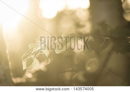 Tree branch with leaves on a bright Sunny background