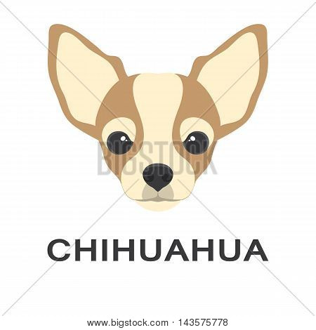 Vector illustration og chihuahua dog in flat style. Chihuahua flat icon.