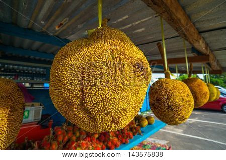 Tarap or Terap (Species: Artocarpus odoratissimus) is a fruit native to Sabah Borneo.The flesh of Tarap is sweet, soft and creamy.