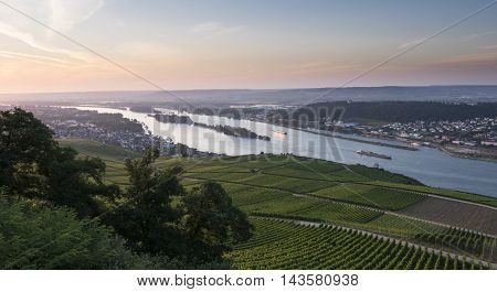 Vineyards And River Rhine Ruedesheim Germany