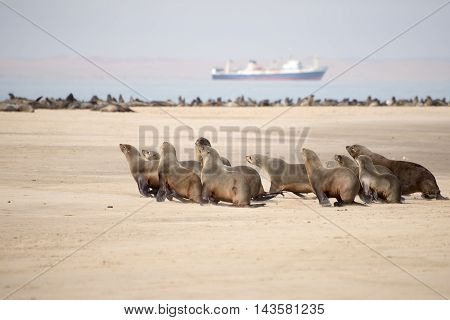 Seals Run Towards Ocean