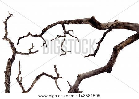 The dried twigs isolated over white background