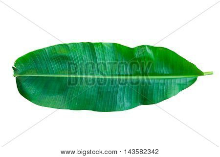 green banana leaf isolated on white background