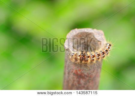 Close-Up of caterpillar shot with macro lens