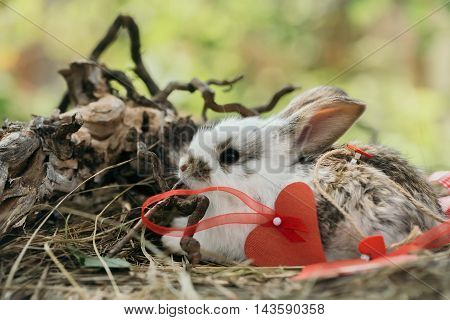 Cute Rabbit With Heart Decorations