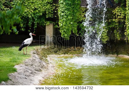 The stork near a waterfall at summer time