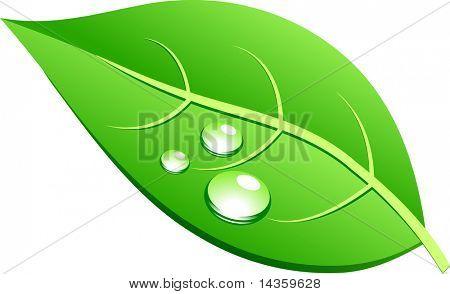 Single green leaf. Vector illustration.
