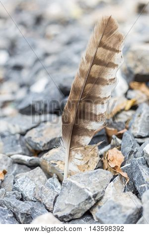 Brown feather at stones background with yellow leaves