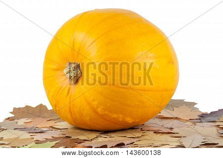 Fall leaves with pumpkins on a white background