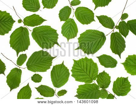 Isolated ornament of green leaves on a white background