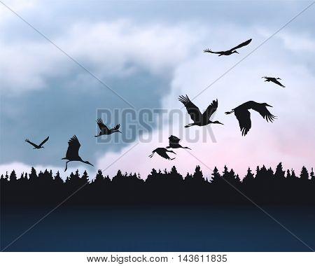 Stork birds silhuetes on sunset cloudy sky