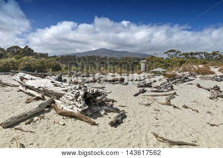 Dead Tree Brought Ashore At Tauparikaka Marine Reserve, Haast, New Zealand