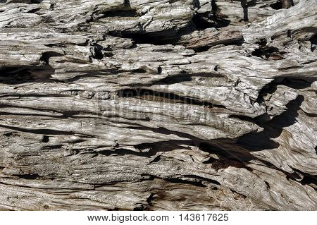 Driftwood background. Driftwood on the beach in New Zealand