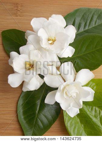 Beautiful white gardenia flower  bouquet on wooden background