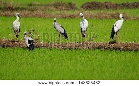 Image of group stork on nature background