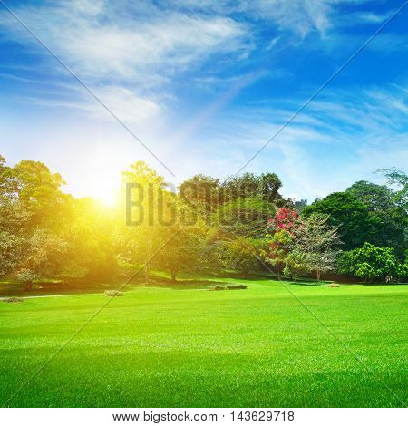 summer park with beautiful green lawns and sun