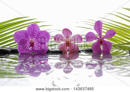 Three pink orchid and wet black stones with green leaf