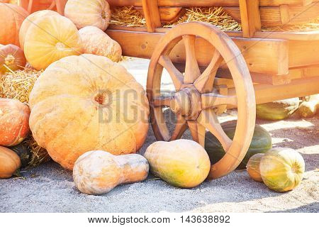 Many colorful pumpkins near a wooden cart on a sunny autumn day