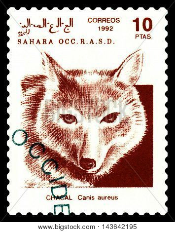 STAVROPOL RUSSIA - August 21 2016: A stamp printed in Sahrawi Arab Democratic Republic (SADR) shows Golden jackal (Canis aureus) circa 1992