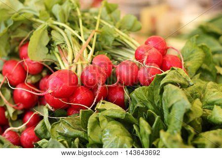 Organic radish on display at farmer's market. Radish background. Radish vegetables.