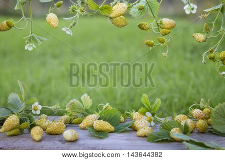 frame of yellow strawberries, leaves and flowers on background of green grass