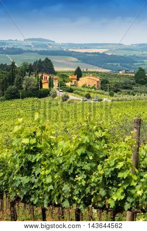 Rolling countryside with wine vineyards and old fashioned villas in Florence Italy.