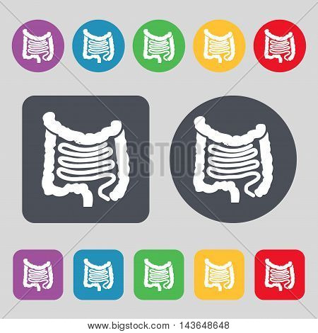 Intestines Icon Sign. A Set Of 12 Colored Buttons. Flat Design. Vector