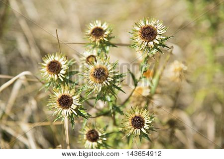 Autumn wildflowers on a background of dry grass.