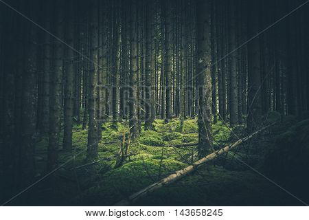 Mossy Forest Place. In the Deep Mossy Spruce Forest.