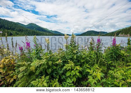 Norway Scenic Landscape with Lake Mountains and the Wildflowers. Norway Europe.