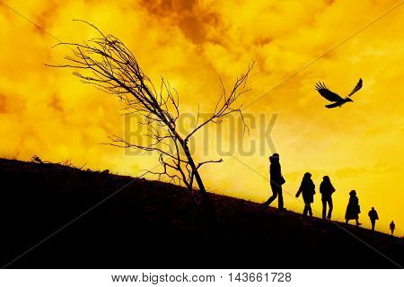 silhouetted people and flying bird over sunset.