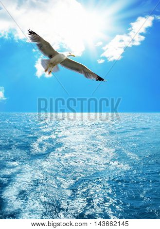 close up shot of flying seagull over clear sky above sea