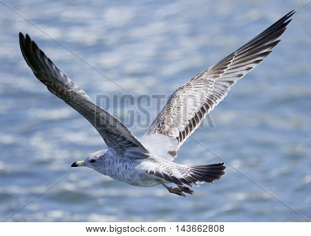 Beautiful background with a flying gull near the water