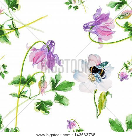 aquilegia isolated on white watercolor isolated on white background