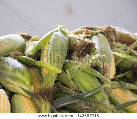 picture of a Corn for sale at a Farmers Market