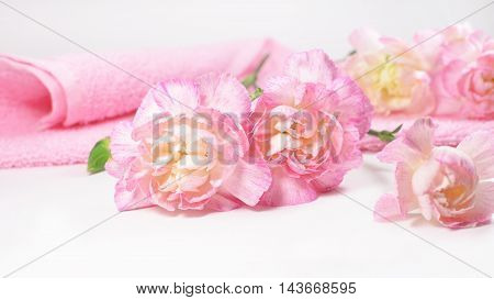 Pink carnation flower branch with a towel on a white background