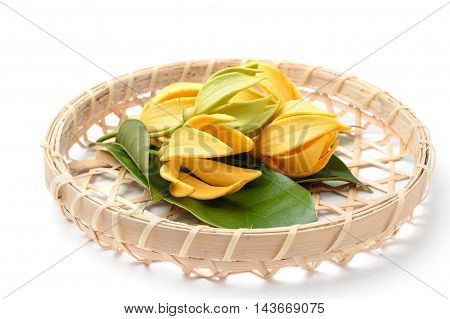 Ylang-Ylang flowerYellow fragrant flower on nature background