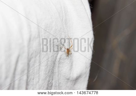 little spider crawling on the white sheet