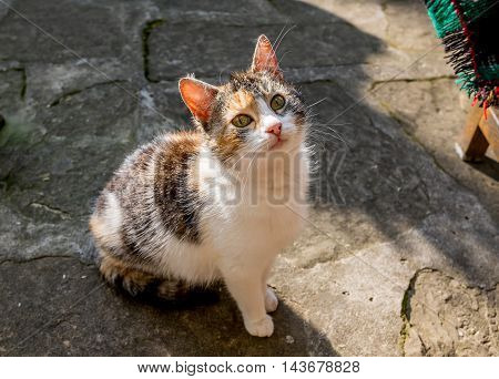 Closeup of lonely cat standing for food