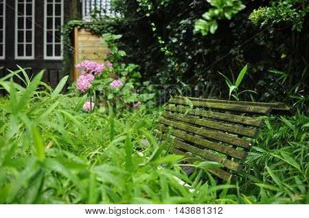 An old garden bench next to wet long leaf japanese grass in a priovate garden.