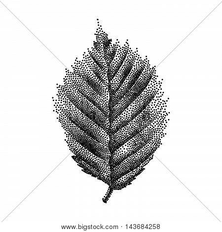 Engraving Birch Leaf Hand Drawn Vector Illustration